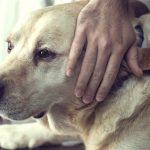 Pet at the vet